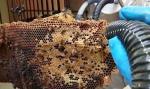 پاورپوینت الگوریتم کولونی زنبور عسل  تعداد26اسلاید